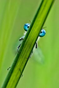 portfolio_nature_Dragonfly-